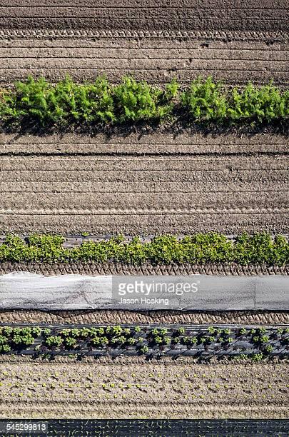 Aerial view of organic vegetable garden