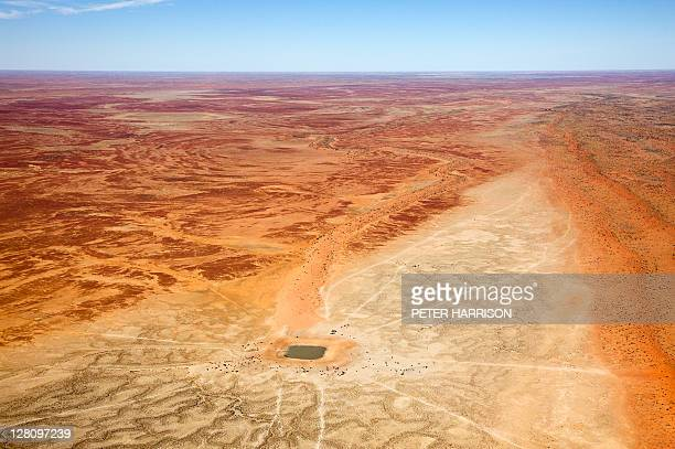 Aerial view of Outback Waterhole with Cattle, Sturts Desert, QLD, Australia