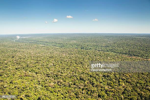 Aerial view of Paranaense rainforest
