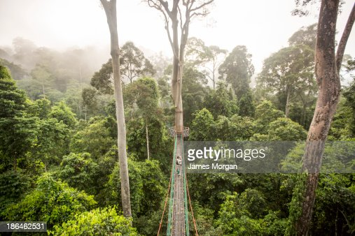 Aerial view of rainforest canopy walkway with man
