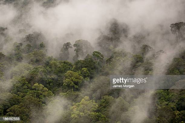 Aerial view of rainforest treetops in mist