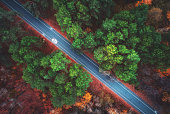 Aerial view of road in beautiful autumn forest. Amazing landscape with empty rural road, trees with green, red and orange leaves in day. Highway through the park. Top view from flying drone. Nature
