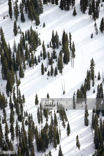 Aerial view of ski slopes in the Rocky Mountains, Colorado