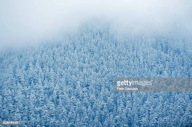Aerial view of snowy trees