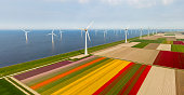 Aerial view of tulip fields and wind turbines in the Noordoostpolder municipality, Flevoland, Netherlands