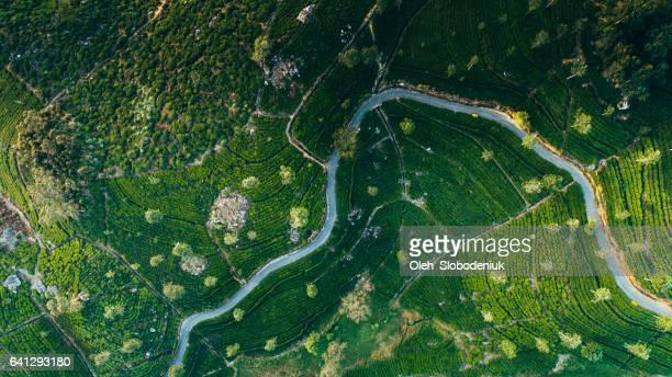 Vue aérienne sur la plantation de thé au Sri Lanka