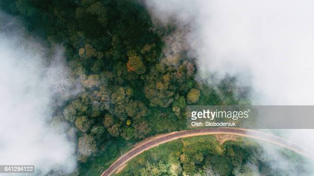 Aerial view on tea plantation in Sri Lanka