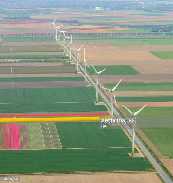 Aerial view on wind turbines and fields of tulip flowers