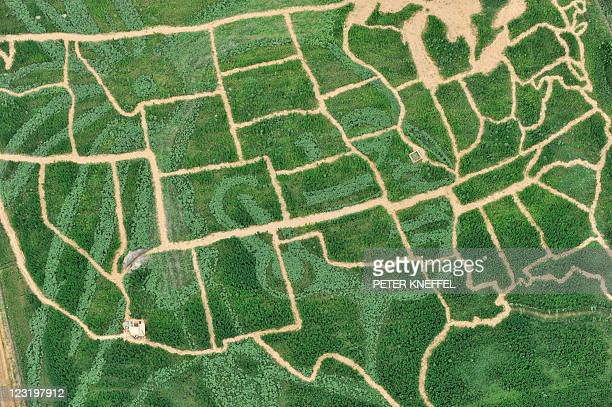 Aerial view taken on July 15 2010 shows a field of corn hemp and sunflowers displaying the map of the United States and the portrait of an Indian...