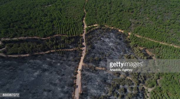 Aerial view taken with a drone of a forest damaged by a fire near the Seytan Sofrasi at Ayvalik Islands Natural Park in Balikesir Turkey on August 18...