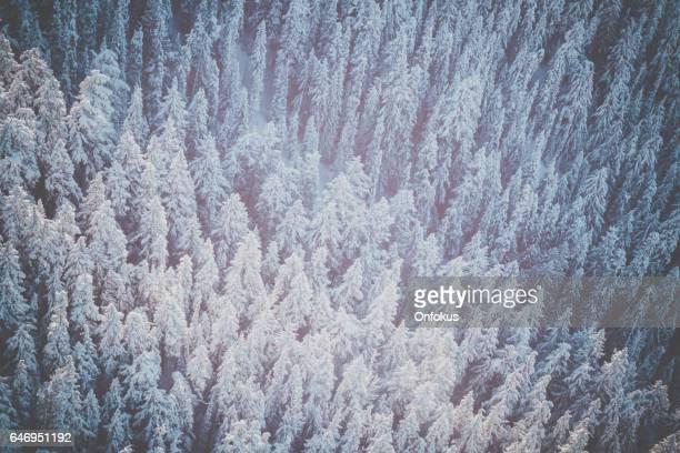 Aerial Winter Forest Landscape, Whistler Blackcomb