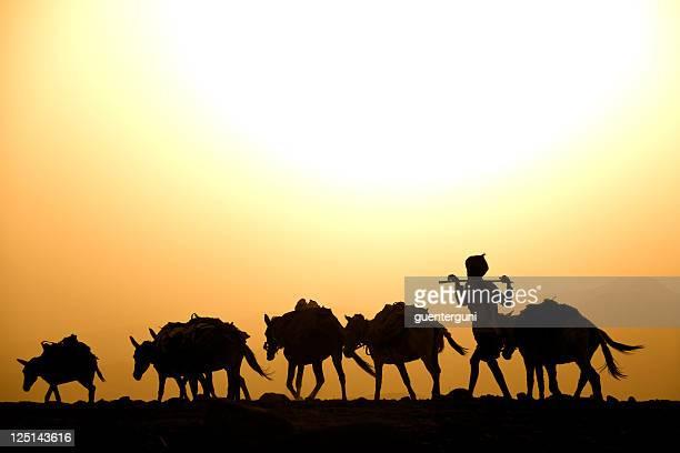 Afar Berger avec son Espeletia contre le coucher du soleil, désert Danakil