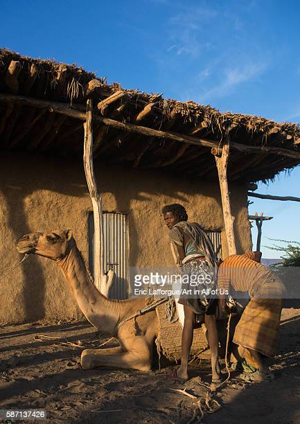 Afar tribe men loading a camel in front of a house afar region afambo Ethiopia on March 1 2016 in Afambo Ethiopia