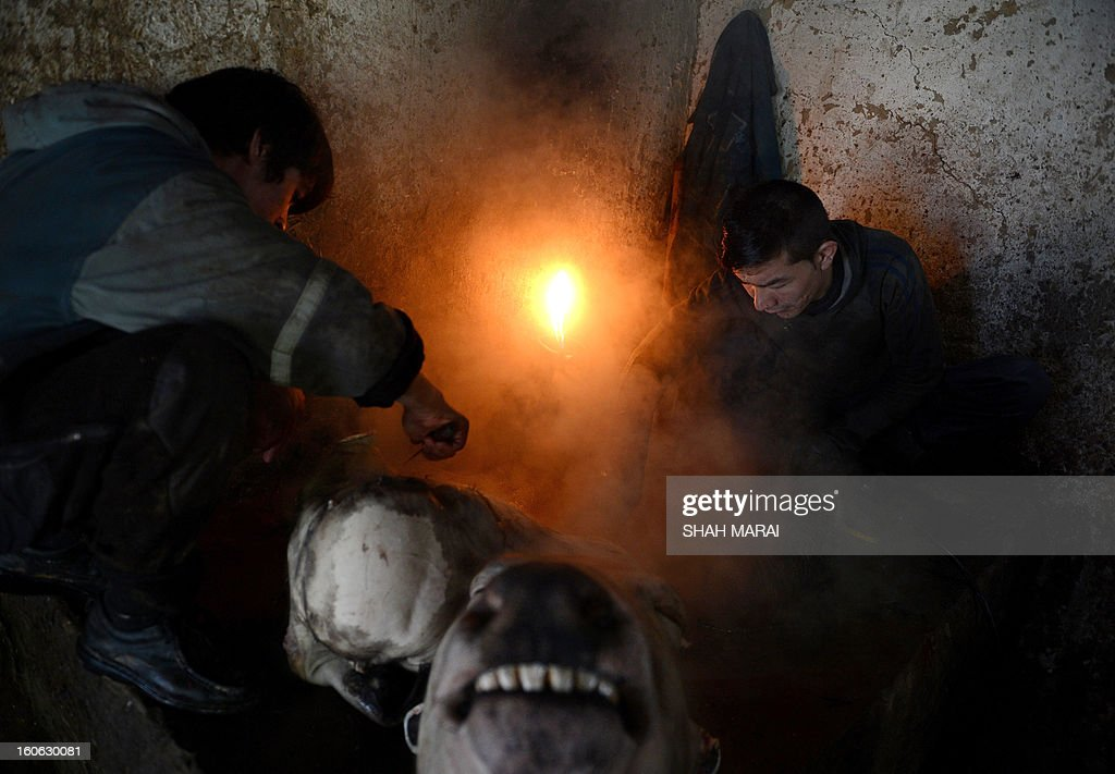 Afghan day labourers skin off cow heads in Kabul on February 4, 2013. Over a third of Afghans are living in abject poverty, as those in power are more concerned about addressing their vested interests rather than the basic needs of the population, a UN report said. AFP PHOTO/ SHAH Marai