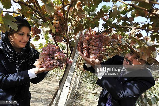 Afghan enterpreneur Hassina Syed president of privately run National Organization of Women and NOW cofounder Syed Shahidi pose with ripe grapes at...