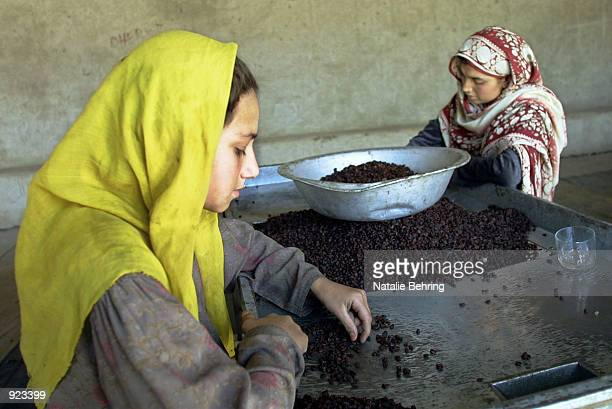 Afghan factory workers sort through raisins July 8 2002 at a raisin factory in Kabul Afghanistan The factory which was closed during the Taliban era...