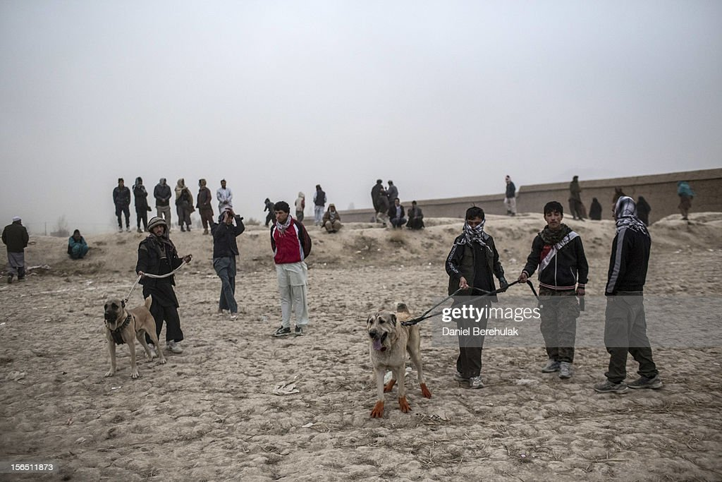 Afghan men arrive with their fighting mastiff dogs for the weekly dog fights on November 16, 2012 in Kabul, Afghanistan. Dog fighting was banned under the Taliban for being un-Islamic but it is now common practice.