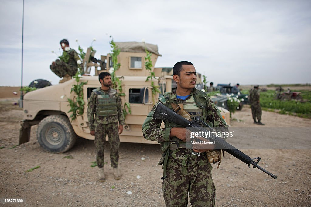 Afghan policeman look on by an opium plant decotated armoured vehicle as they destroy the crop, on March 14, 2013, in Babaji village-Helmand Province ,south east Afghanistan. Most of the opium is chemically processed to produce herion, which ends up heading to either Iran, Russia and/or Europe. According to United Nations report, in 2012 there was an increase of 18 percent in cultivation of opium in Afghanistan; the world's largest source of the crop.