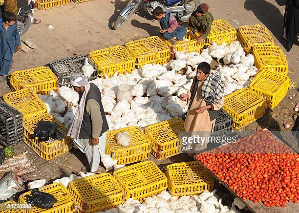 Afghan vendors sell chickens in downtown Herat on October 25 ahead of the Muslim feast of Eid alAdha Eid alAdha is celebrated throughout the Muslim...