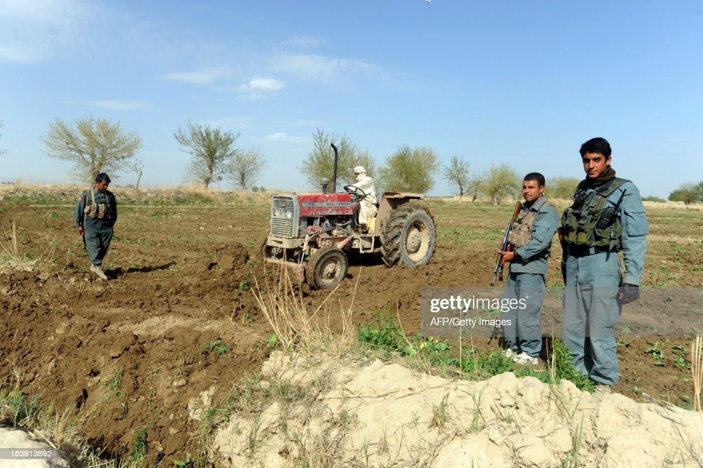Afghanistan police and officials destroy a poppy field in the Panjwai district of Kandahar province on March 17, 2013. Poppy cultivation is expected to increase in both eastern and western provinces of the country, though will remain at a much lower level of cultivation as compared to Helmand and Kandahar provinces, the United Nations office on Drugs and Crimes (UNODC) said in its 2012 report. AFP PHOTO/Jangir