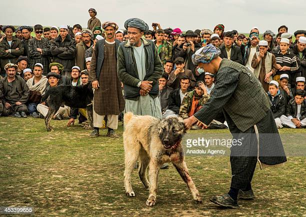 Afghans and their dogs to be fought during a dogfight banned in Taliban era and so is it up to date and held in secret which is also the reason why...