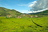 A small African village inside a large tea plantation. In the background hills with typical fields of small farmers in Central Africa - because the population in Rwanda is having the highest denisty i