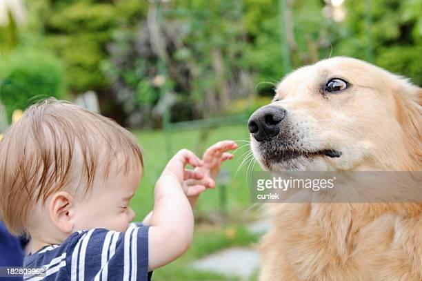 Angst der Hund