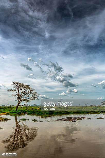 África Acácia-Reflexo