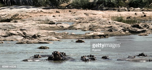 Africa, East Africa, Kenya, Tsavo East National Park, View Of Hippos, (Year 2000)