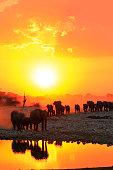 Africa elephants loxodonta africana group family drinking waterhole safari big five wildlife sunsets