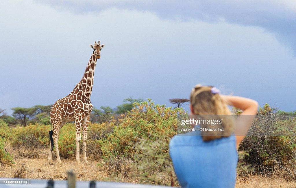 Africa, Kenya, Samburu National Park, woman photographing giraffe : Stock Photo