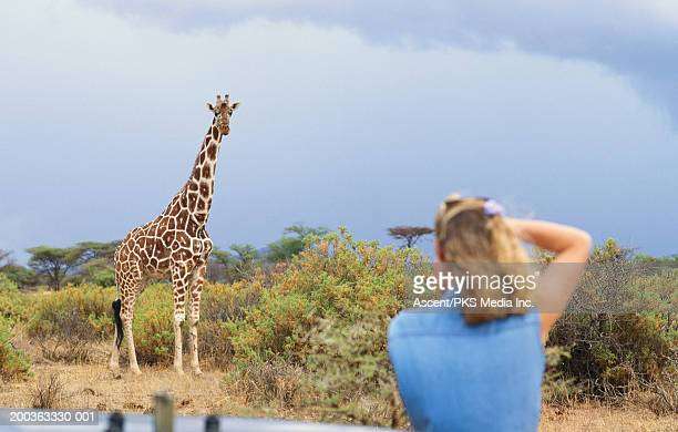 Africa, Kenya, Samburu National Park, woman photographing giraffe