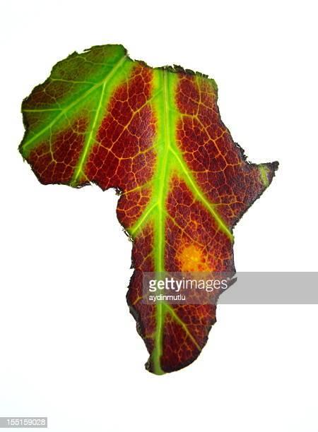 Feuille de l'Afrique