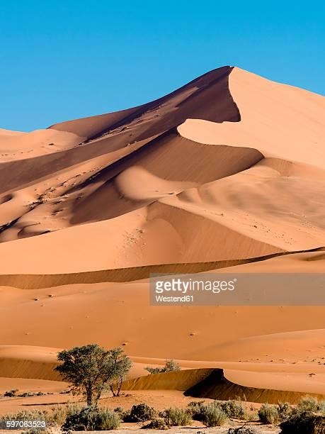 Africa, Namibia, Hardap, camel thorn at Namib desert, sand dune