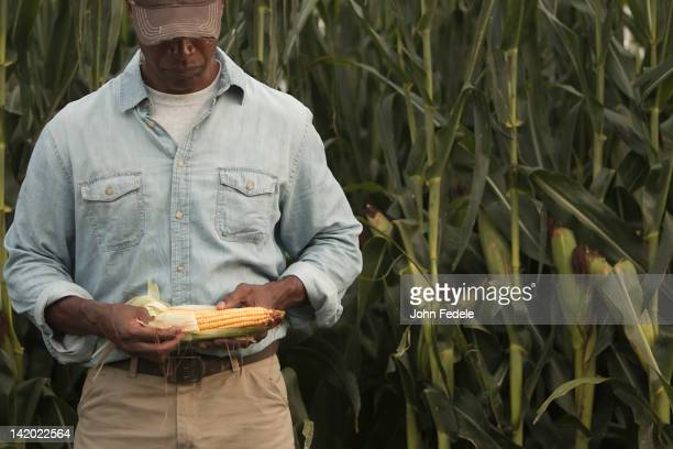 African American farmer looking at corn crop