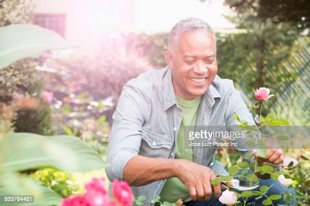 African American man pruning flowers in garden