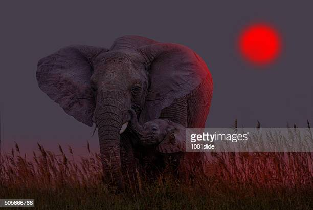 Afrikanischer Elefant und baby