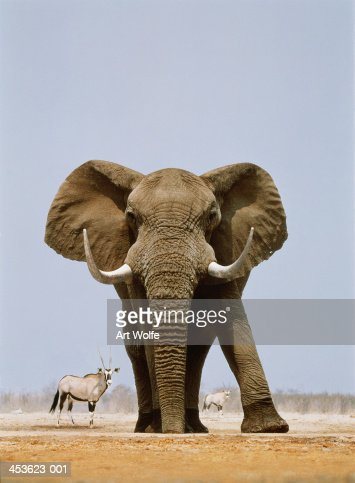 African elephant and gemsboks, Namibia (Digital Composite) : Stock Photo