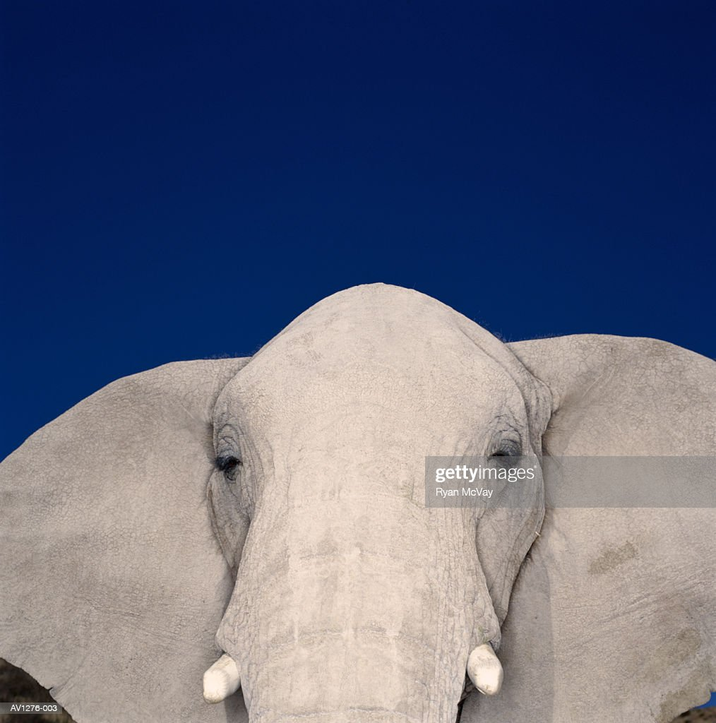 African elephant (Loxodonta africana) close-up (brightly lit) : Stock Photo