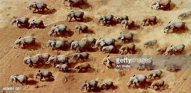 African elephant herd (Loxodonta africana),Kenya (Digital Composite)