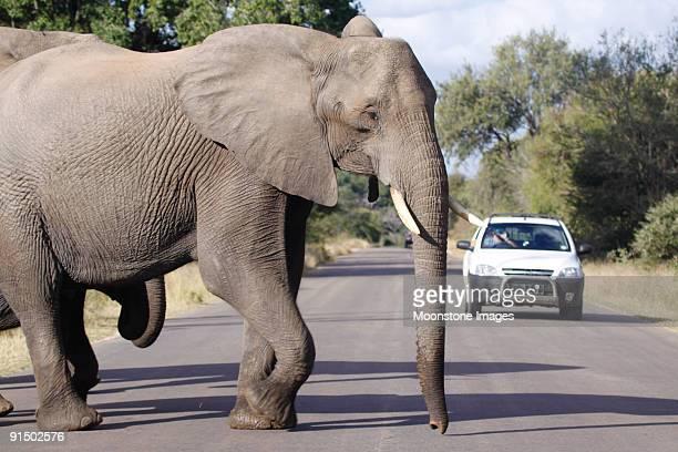 アフリカの象にクルーガーパーク、南アフリカ