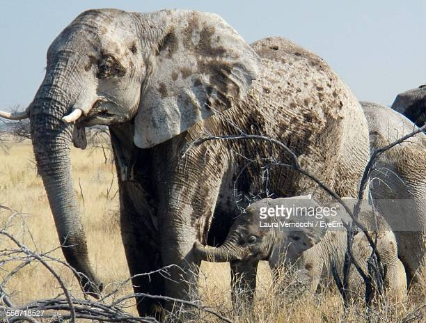 African Elephant With Calf On Grassy Field During Sunny Day