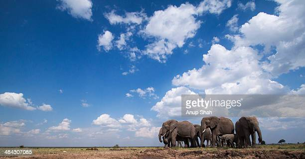 African elephants gathering at a waterhole