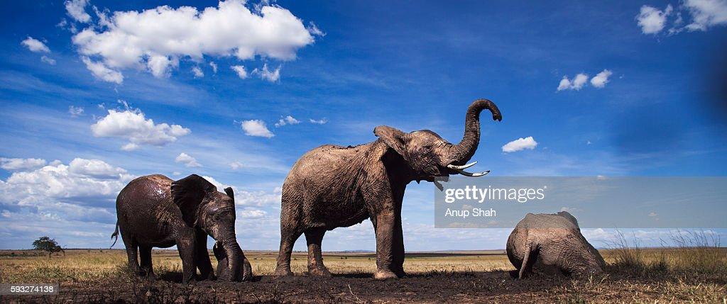 African elephants gathering at a waterhole