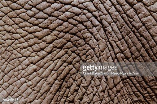 African elephant's (Loxodonta africana) skin, full frame : Stock Photo