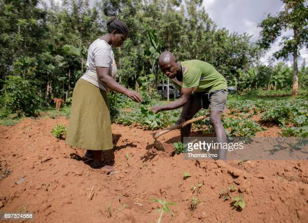African farmers are working on a field in Kakamega County on May 16 2017 in Kakamega County Kenya