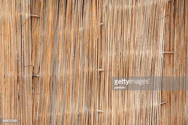 african parete