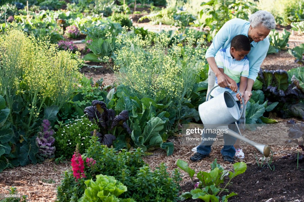 African grandmother gardening with grandson : Stock Photo