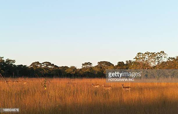 African Landscape with Antelopes