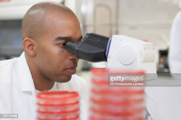 African male scientist with Petri dishes and microscope